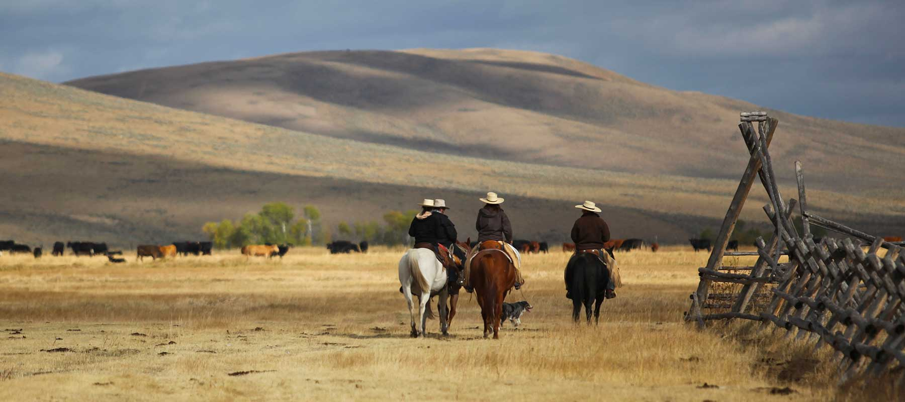 Montana Cattle Ranches for Sale