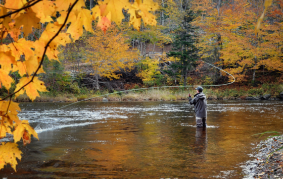 Best spots to fly fish in Montana